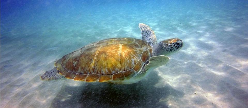 Livingstone Jan Thiel Curacao duikschool vd Ven