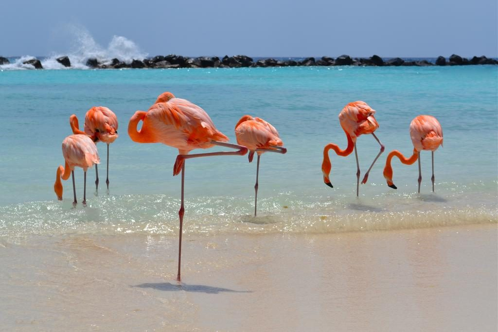 Renaissance Resort Aruba