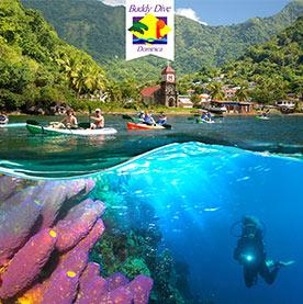 Buddy Dive Dominica