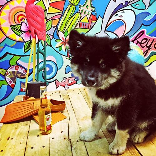 bosco-puppy