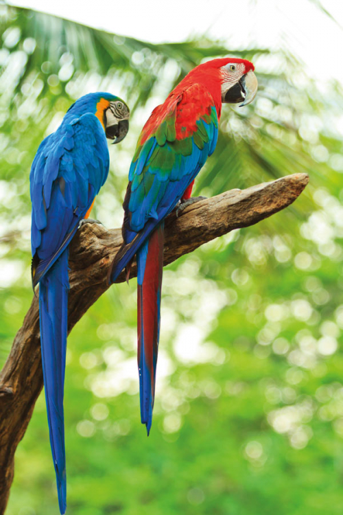 belize-birds